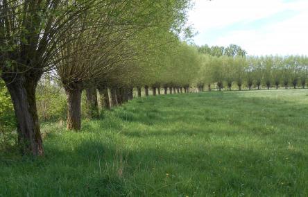 groene landschapselementen